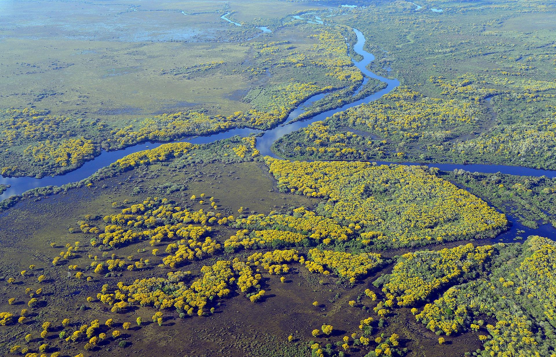 Découverte : le Pantanal