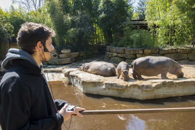 animation-hippopotames2_adrien-farese_23.04.21