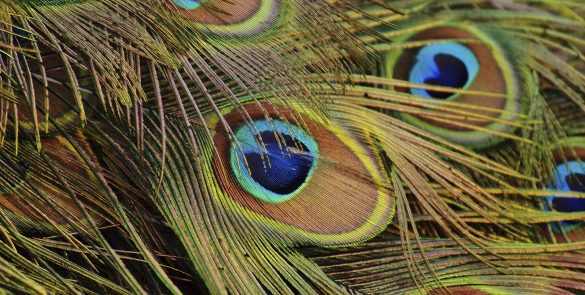 Zoo d'Amneville - Plumes