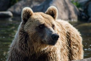 Zoo d'Amneville - Animaux - Ours